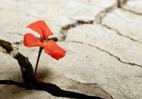 resilienza e crescita personale